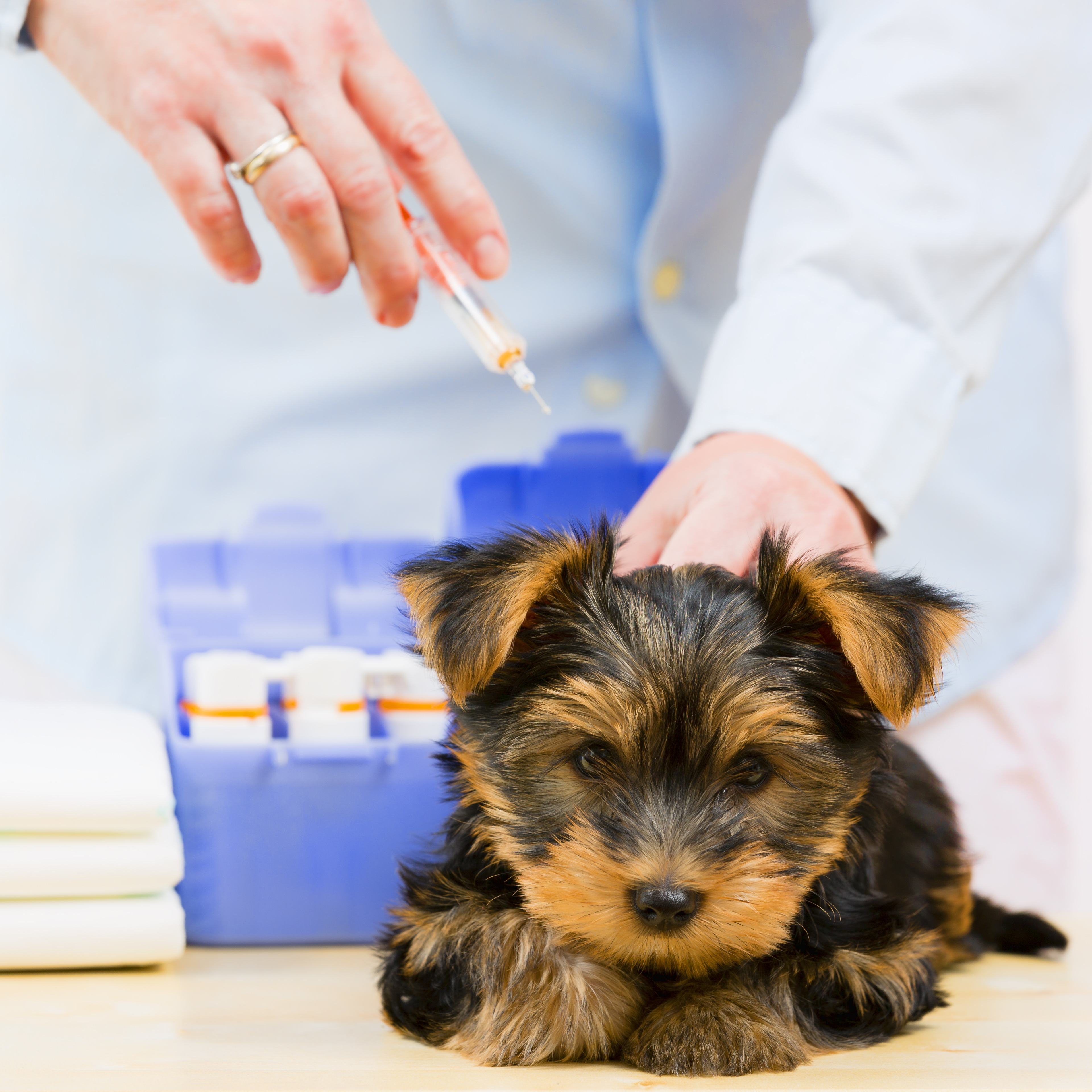 vaccinations for dogs boca raton fl