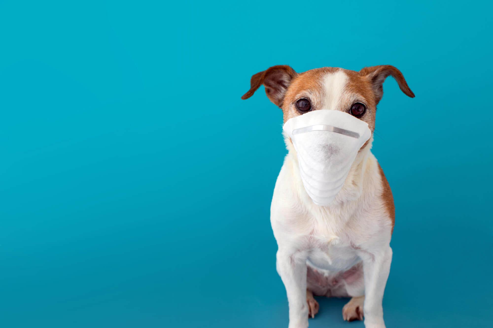 Dog Covid19